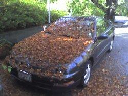 my leafy car