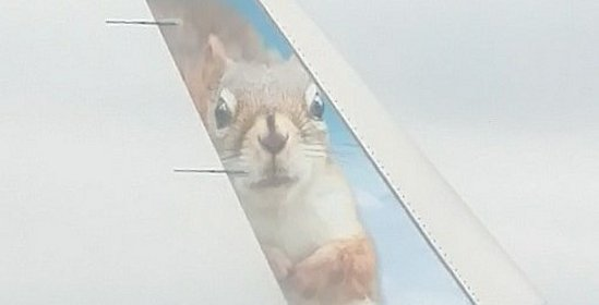 Squirrel on wingtip 2